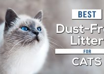 Best Dust Free Cat Litter