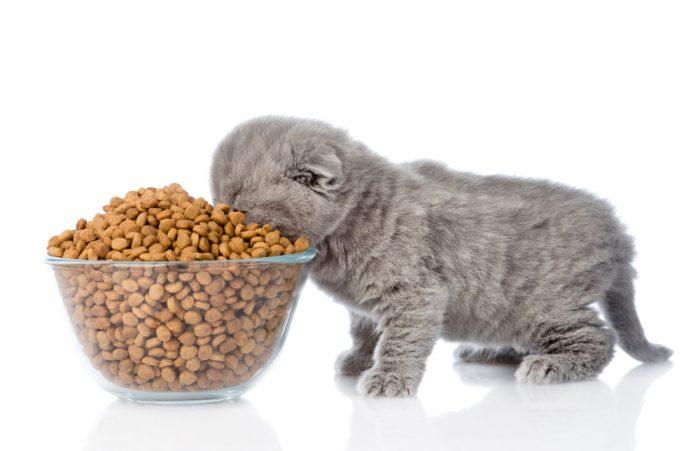 10 Best Kitten Foods of 2021