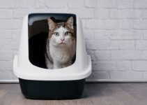 Top 9 Best self-cleaning litter box to Buy in 2020