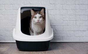 Top 9 Best self-cleaning litter box to Buy in 2021