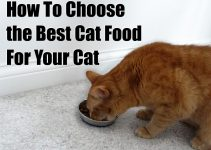 How to Choose Best Cat Foods