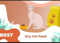 8 Best dry cat foods to Buy in 2020