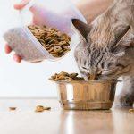 Best Grain Free Cat Foods of 2021