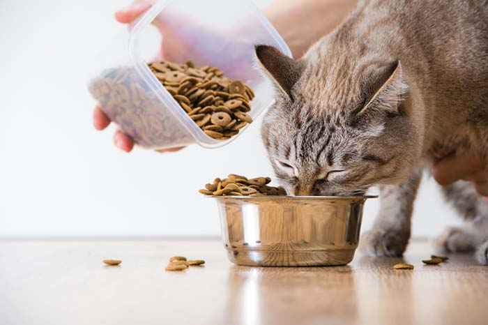 Best Grain Free Cat Foods