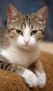 unisex tabby cat names