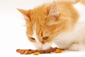 Soft Dry Cat food for indoor cats