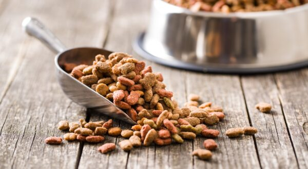 top dry cat foods of 2021