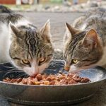 Indoor Cat Dry Food