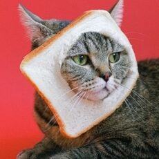 Can Cats Eat Grain?