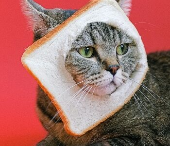 Can Cats Eat Grain