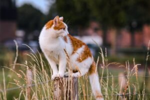 Can cats eat food with grain