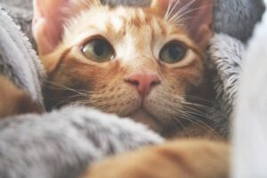dry vs wet cat food pros and cons